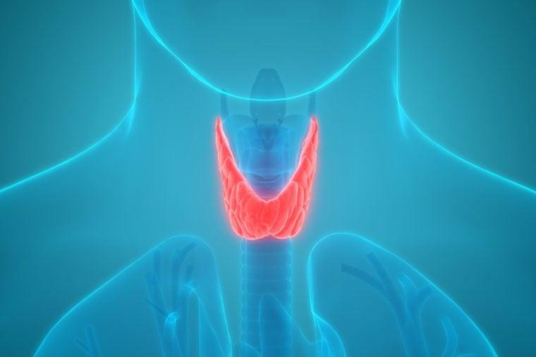 Human Body Glands Anatomy (Thyroid Gland) Anterior View. 3D