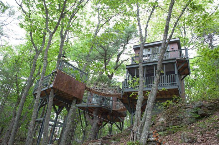 modern tree dwelling