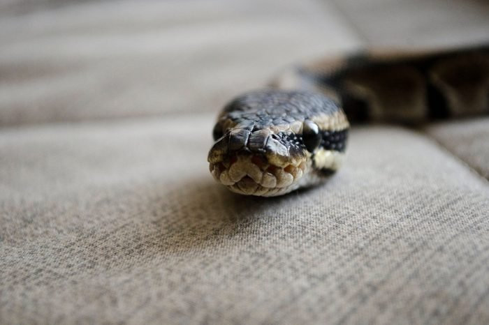 Snake in the house