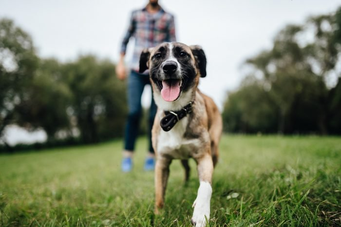 Adult stylish man playing with pet. Family outdoor. Animal lover. Happy dog enjoying freedom. Terrier breeding puppy have fun with owner. Furry crazy canine training at nature. Friends together.