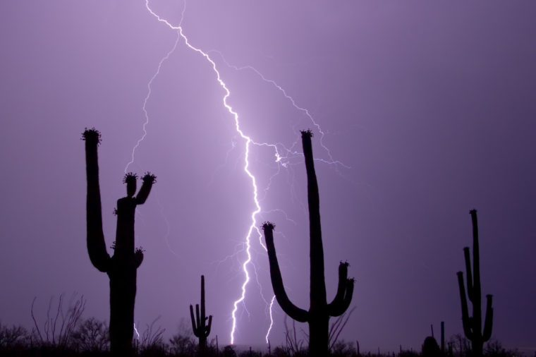 A group of Saguaros enjoy a desert lightning display