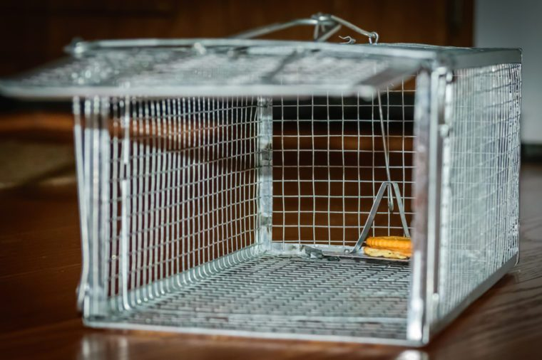Mouse trap-Humane catch and release-urban photography