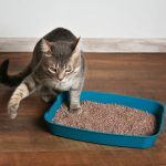 13 Signs You Hired a Bad Pet Sitter