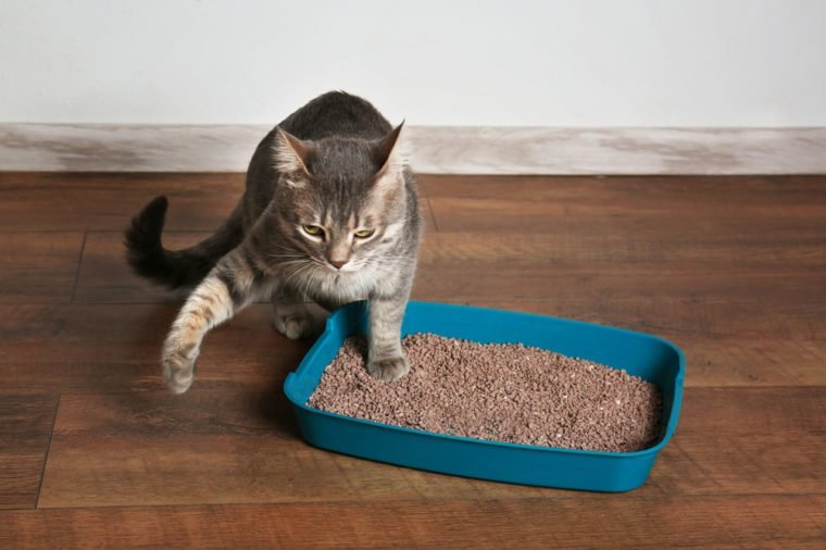 Cute cat in plastic litter box on floor