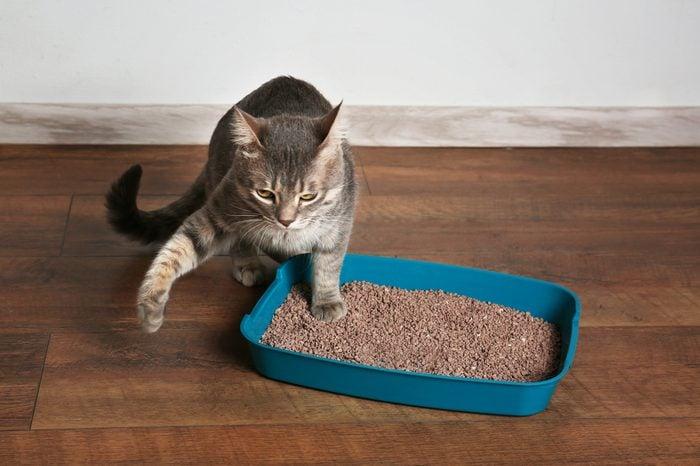 Cute cat in plastic litter box on floor