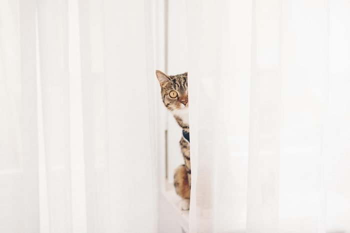 Kitten sitting on a windowsill and looking out for curtains