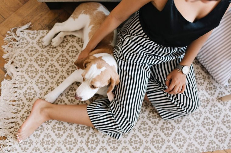 Overhead view of tanned girl in striped pants sitting on carpet with beagle dog sleeping beside. Portrait from above of woman in trendy bracelet resting on wooden floor with cute puppy.