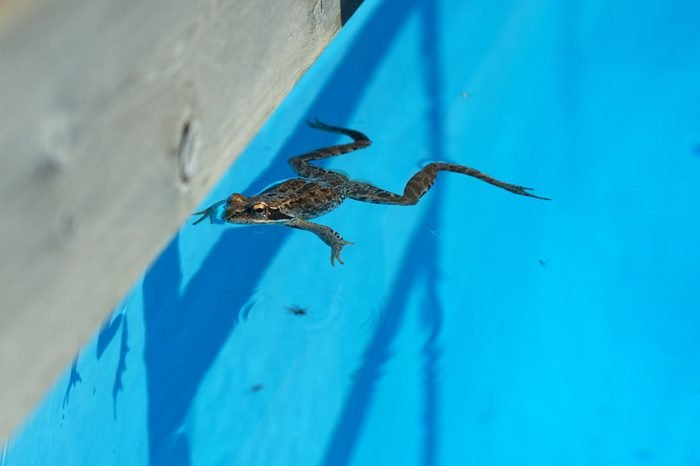 """A live frog swims in the pool, """" If you are considered unworthy it does not mean that you can not afford more"""""""