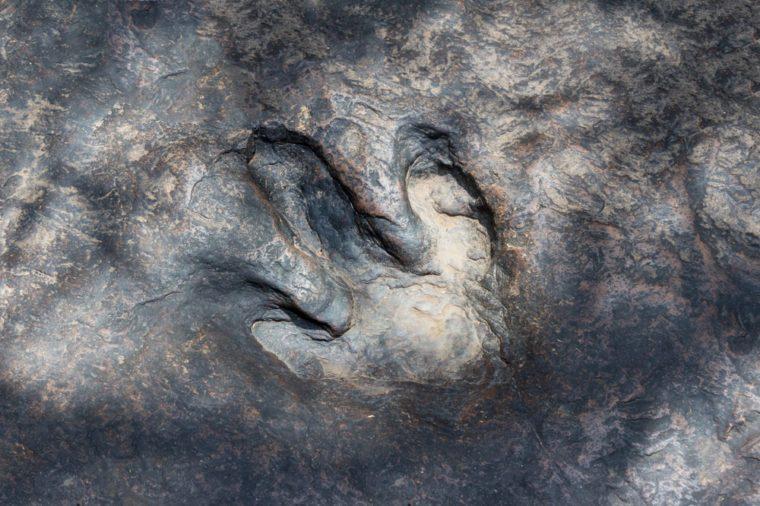 Real dinosaur footprint , Thailand.