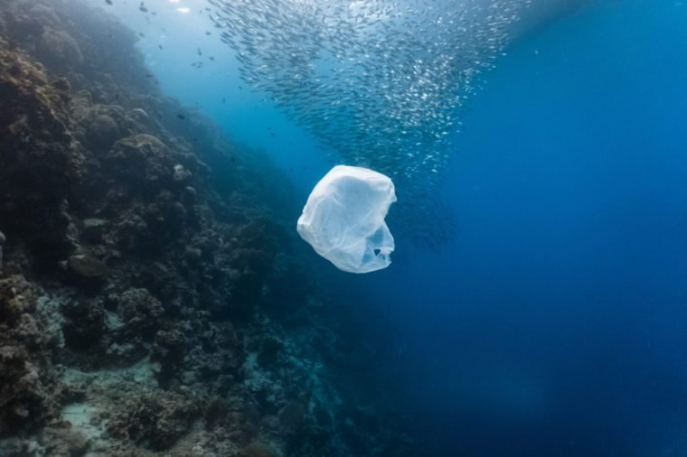 Single-use plastic and school of fish in a shallow reef