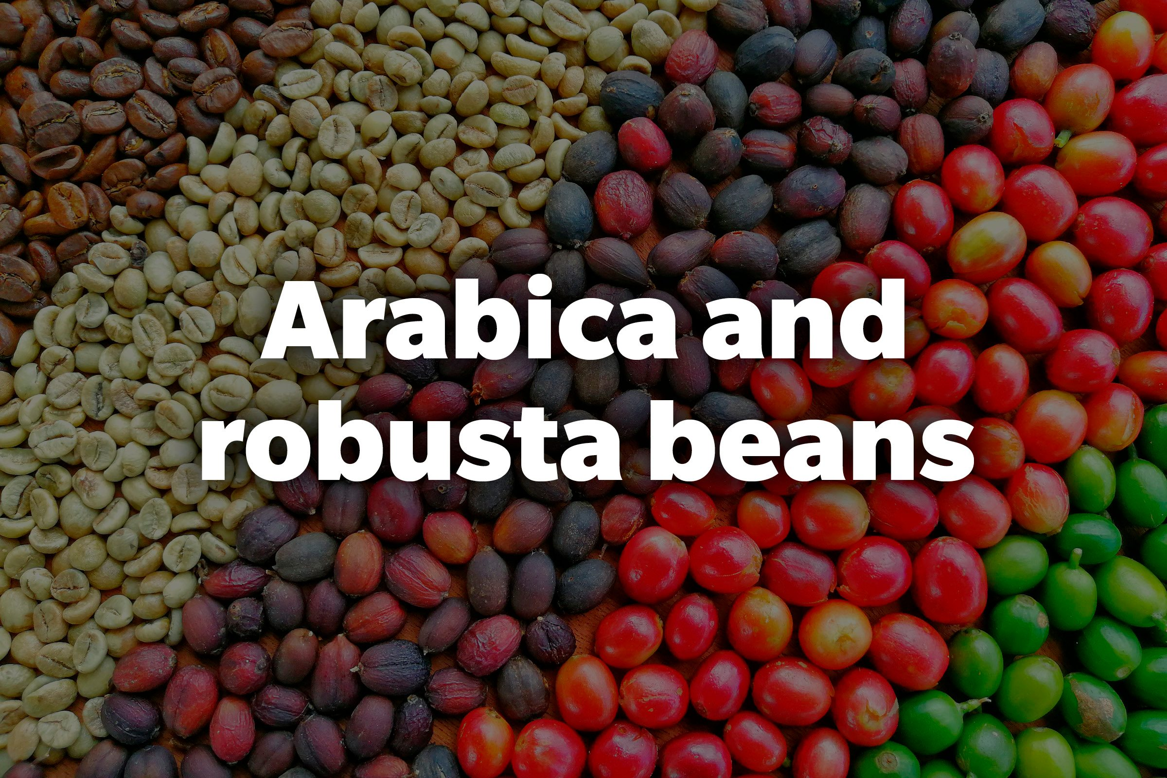 Arabica and robusta beans