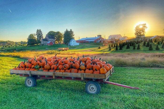Gaver farms