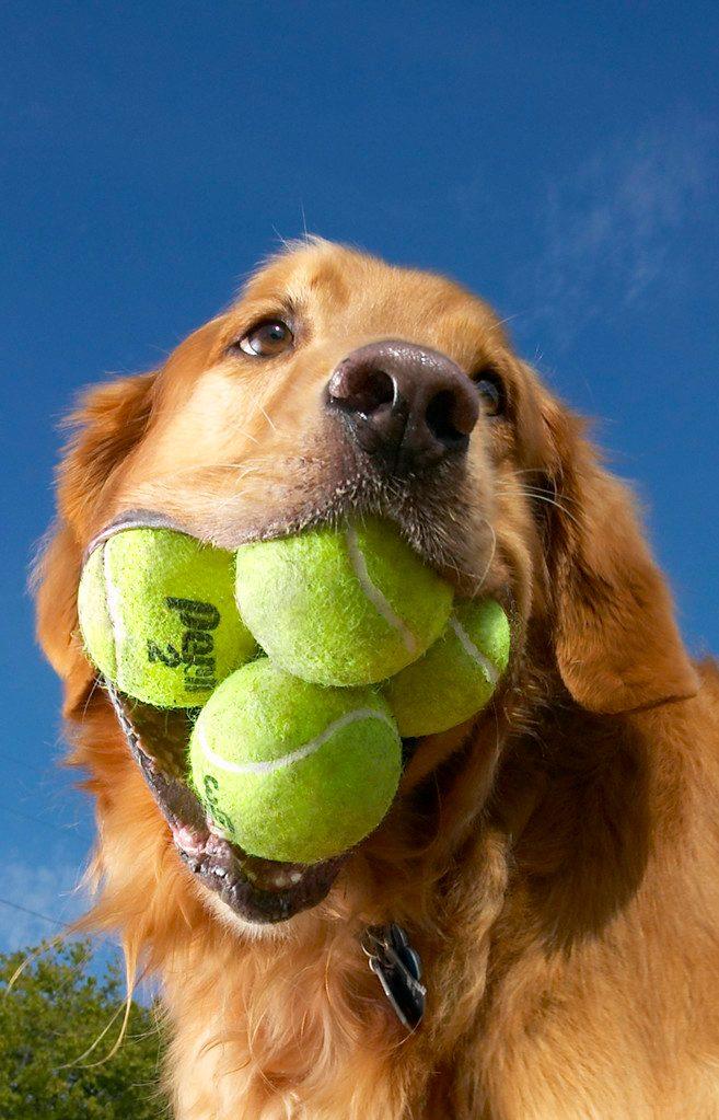 Większość piłek tenisowych