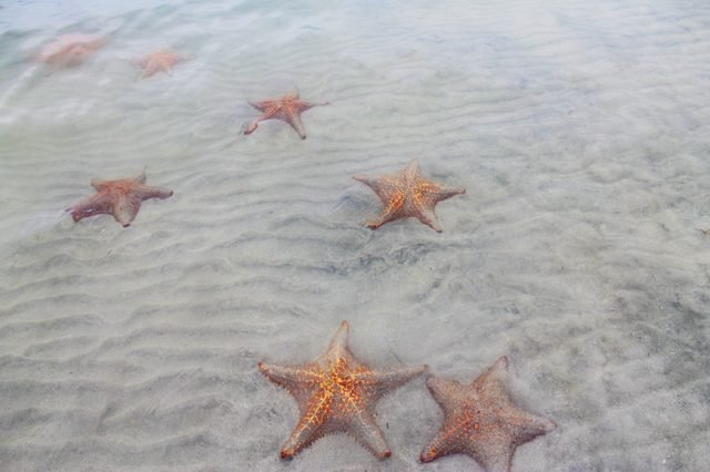 Set of red starfish on a beach in Bocas del Toro, Panama