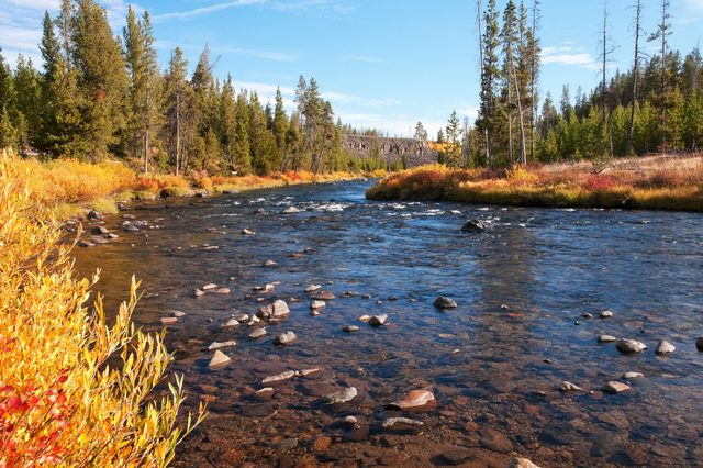 Gardner River in the Sheepeater Cliff picnic area of Yellowstone National Park, Wyoming.