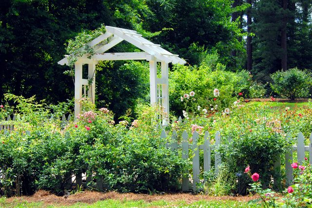 Gardens of the American Rose Center in Shreveport, Louisiana has beautiful landscaping with this white wooden pavillion and white picket fence. Hollyhocks and roses bloom together around fence.