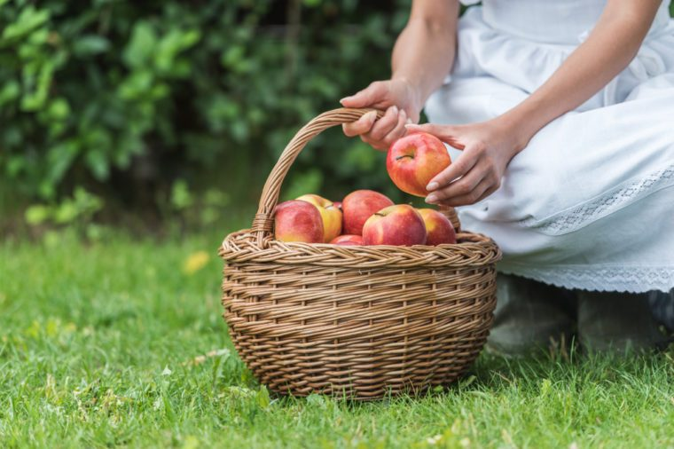 cropped view of girl picking apples into wicker basket in garden