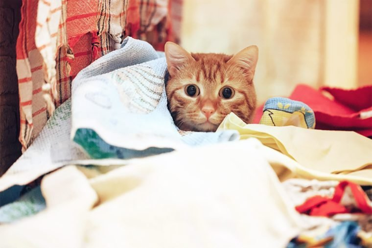 The Ginger Cat Sits in the Linen which was Thrown Off from the Clothes Dryer