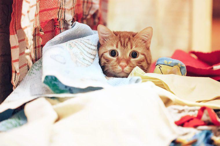 Ginger Cat siedzi w pościeli wyrzuconej z suszarki