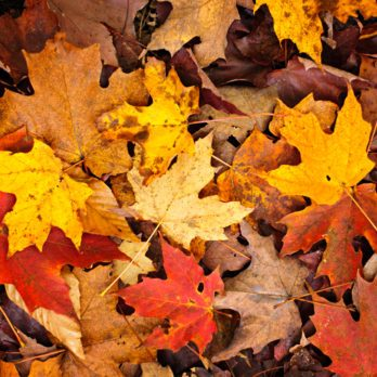 When Is the First Day of Fall? 13 Fun Facts About the Fall Equinox