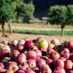 The Best Place to Go Apple Picking in Every State