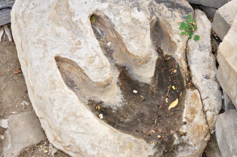 Real dinosaur footprint imprinted in the rock.