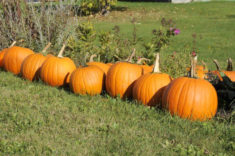 Pumpkins at farmer's market, Vermont