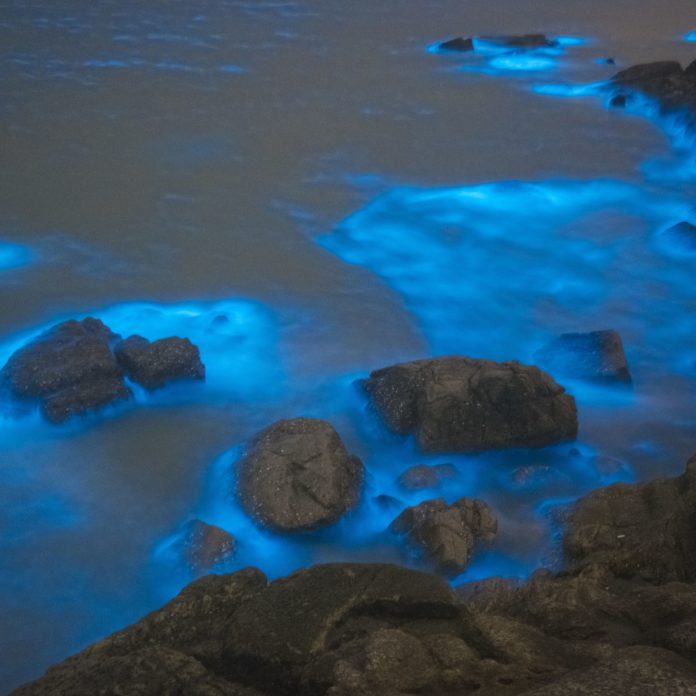 6 of the Most Beautiful Glowing Beaches Around the World