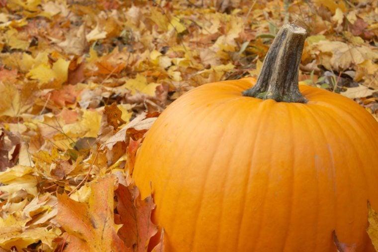 Thanksgiving Pumpkin Scene