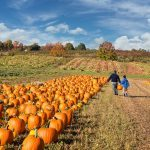 The Best Pumpkin Patch in Every State
