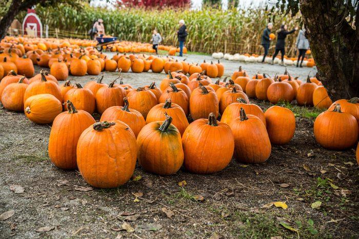 Halloween - Pumpkin Patch