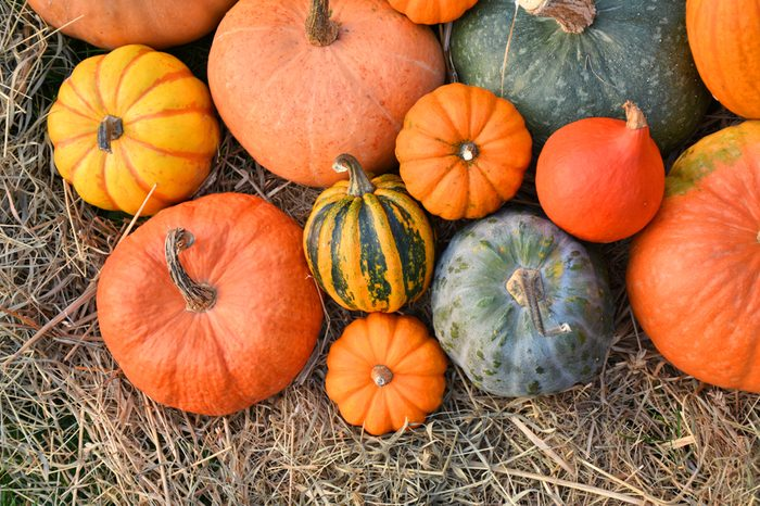 Different varieties of squashes and pumpkins on straw. Colorful vegetables top view