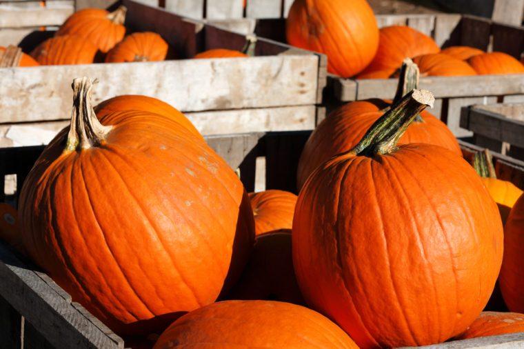 pumpkins at farm market Stow Massachusetts
