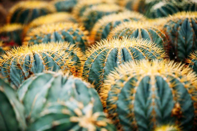 Xiamen Garden Botanical Garden
