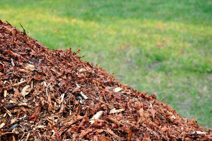 Mulch on grass, nature biomass.