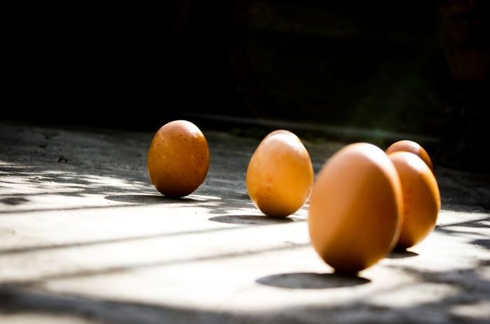 Chicken Egg Standing