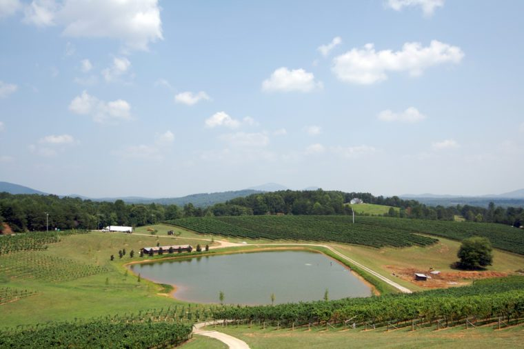 Landscape with a pond and vineyard in Georgia