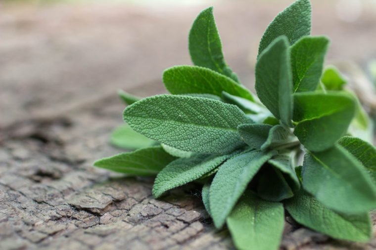 A bunch of fresh sage on an old wooden table. Selective focus