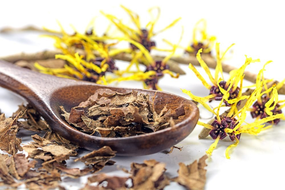 flowering witch hazel (Hamamelis) and wooden spoon with dried leaves for homemade skin care cosmetics and bath additive on a white background, closeup with selected focus, narrow depth of field