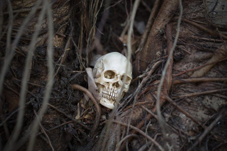 skull is between tree root
