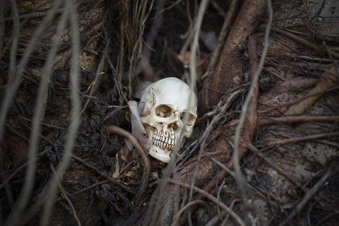 skull is between tree root