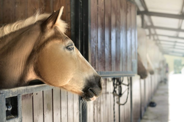 Horse looking out from his stable