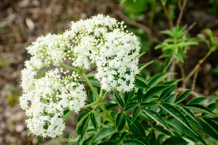 closeup photo of white flower, valerian