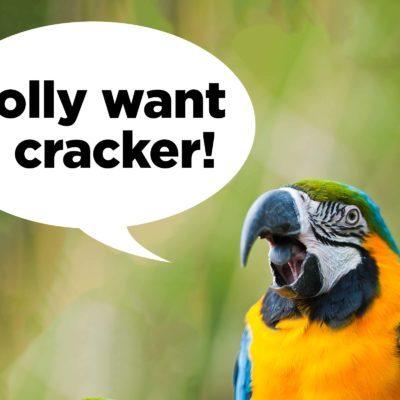 polly want a cracker
