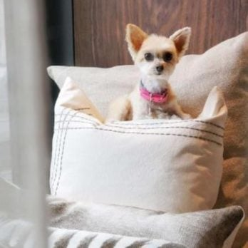 15 Best Pet-Friendly Hotels in America
