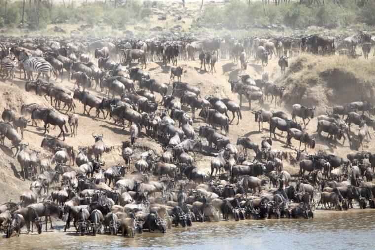 migration tanzania