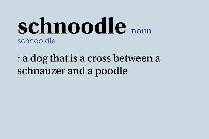 schnoodle definition