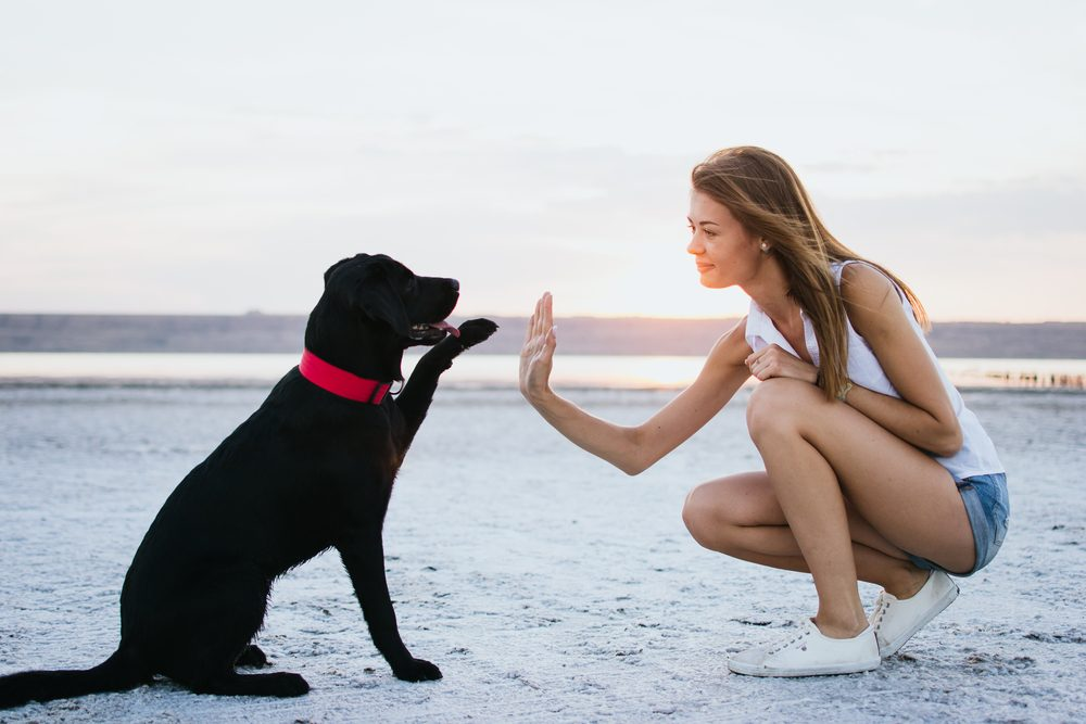 6 Things Your Pets Body Language Is Trying To Tell You