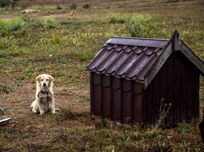 guard dog sit near the doghouse
