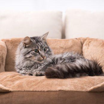 15 Best Pet-Friendly Hotels in America